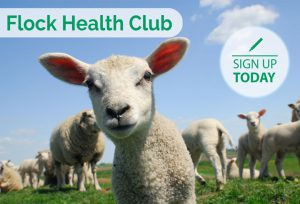 Flock Health Club advert