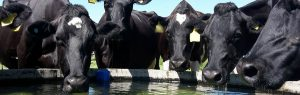 Register of mobility scorers' cows